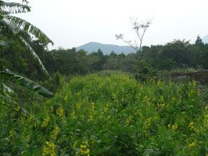 10月の畑