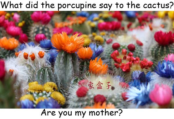 cactus 仙人掌 porcupine 豪豬 mother 母親 媽媽