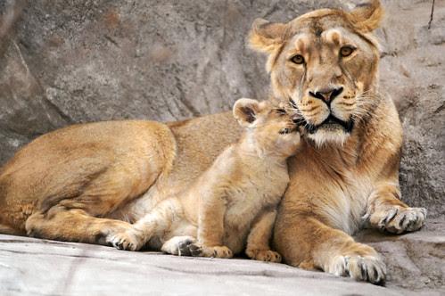 «I love you, mom!»