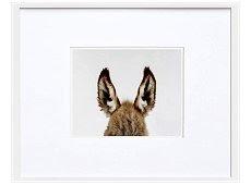 Orelhas de burro