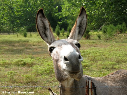 The Daily Donkey 107