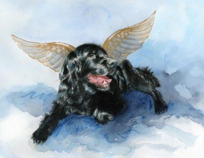 eutanasia cachorro