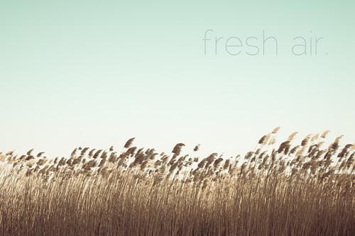 ~ fresh air.