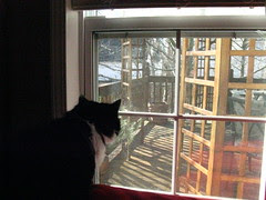 Josie on squirrel patrol