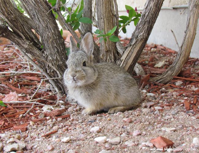 Baby Bunny1