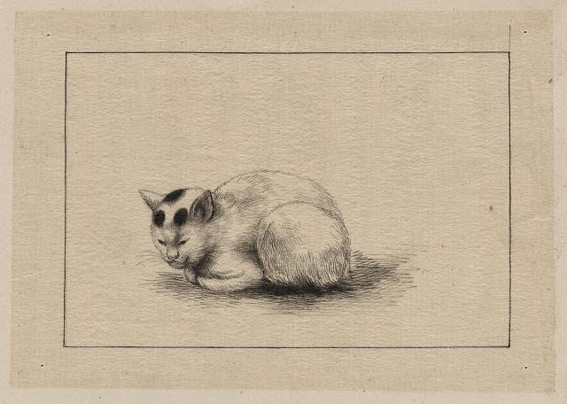 [Domestic cat]