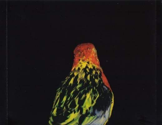 Andrew Bird Armchair Apocrypha - HOME DECOR