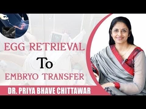 Egg Retrievel to Embryo Transfer