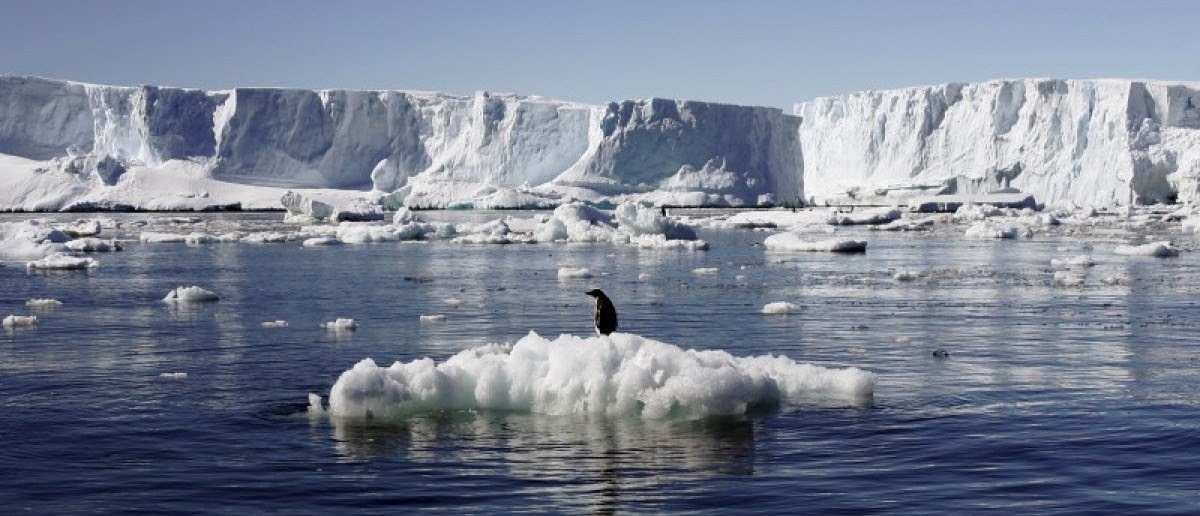 An Adelie penguin stands atop a block of melting ice near the French station at Dumont díUrville in East Antarctica in this January 23, 2010 file photo. REUTERS/Pauline Askin/Files