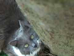Miss Cat Flower, 141005