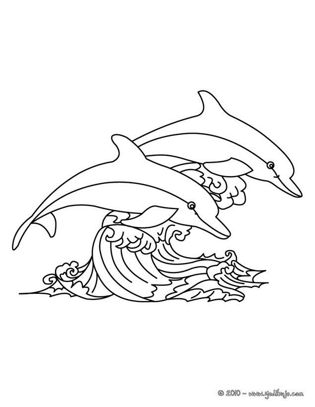 Dibujos Para Colorear Delfines Saltando Es Hellokids Com