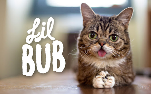 Lil Bub: gata lança disco no final do ano