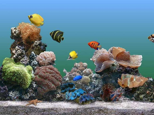 Marine Aquarium Preciosa pecera virtual con reloj y calendario incluido
