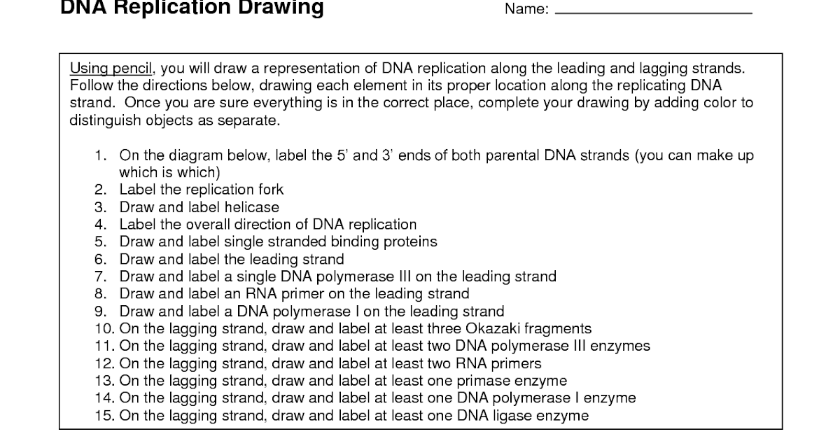 Dna The Double Helix Worksheet Answer Key Biology Corner ...