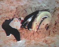 broken Gemini capsule - wodged in desert