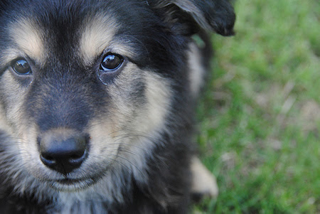 Adopt a Mutt: Why Mutts Are Awesome! | Holly Lewitas
