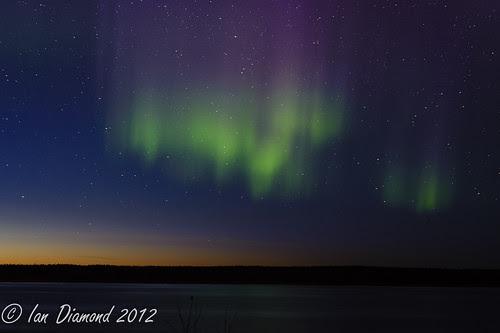 Aurora with a dash of Twilight BUD_4840