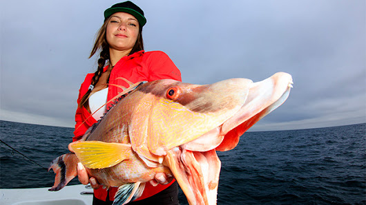 Hogfish on Hook and Line