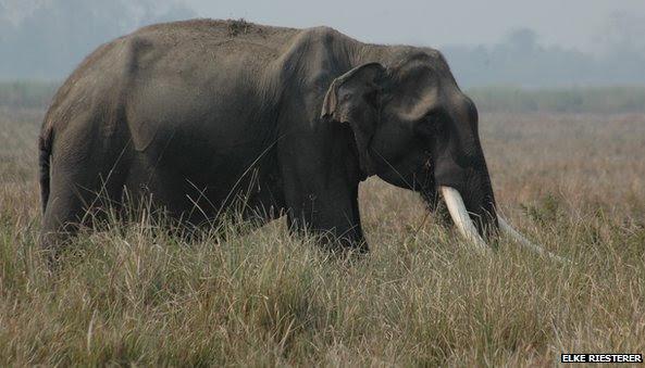 Ambiente, Ondas3, elefante