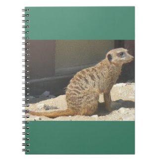 Meerkat Notebook