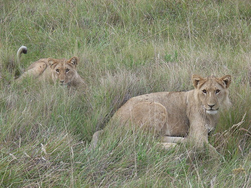 Sydafrika feb 2007 271