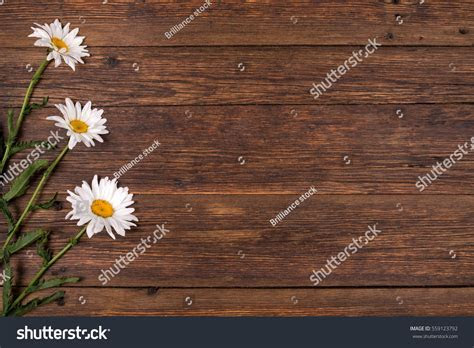 White Chamomile Flowers On Brown Background Stock Photo