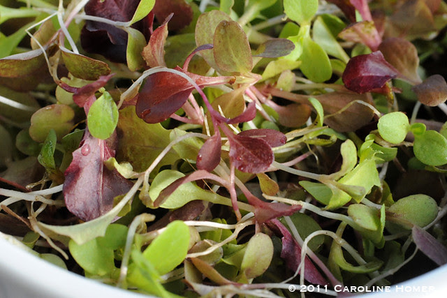 Microgreens from thinned seedlings