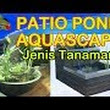 Video Jenis Tanaman Patio Pond Aquascape Aquatic