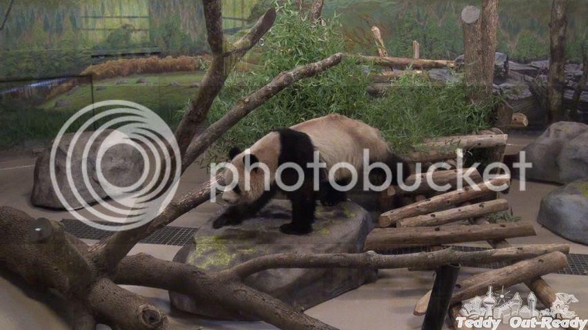 Toronto Panda