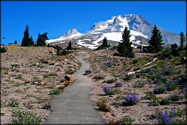 Mt. Hood from Timberline Lodge area