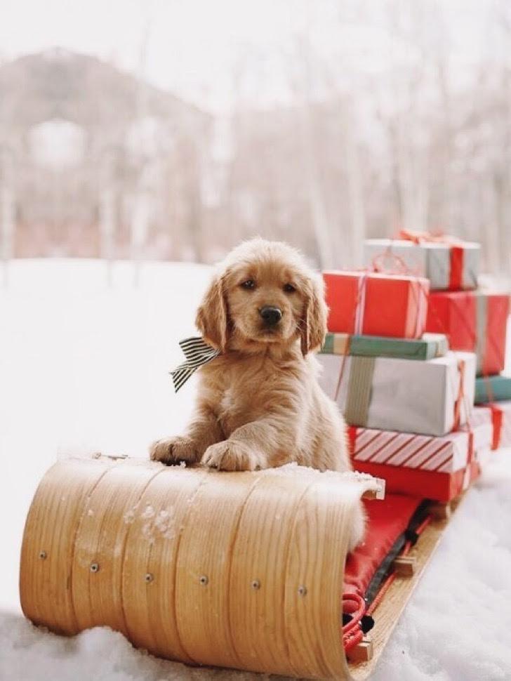 Navidad Canina Navidad 22 Perros Que Representan A La Perfección