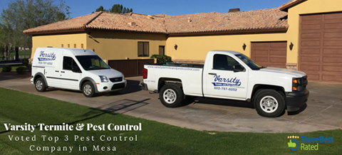 Varsity Termite & Pest Control Voted Top 3 Mesa Pest Control Companies by ThreeBestRated.com