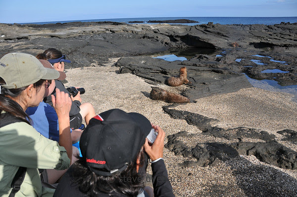Everyone loves photographing sea lion pups