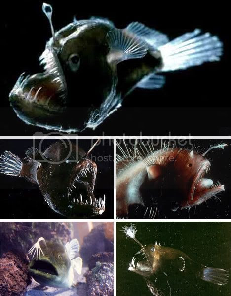 Deepsea Glowing Angler Fish