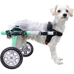 "Lightweight for Small Dogs 11-25 Pounds - Veterinarian Approved - Dog Wheelchair for Back Legs 18-25 lbs, 9-11"" leg"