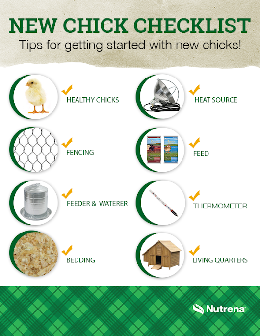 New Chick Checklist | The Scoop from the Coop