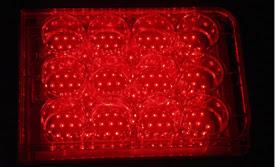 NASA LEDs