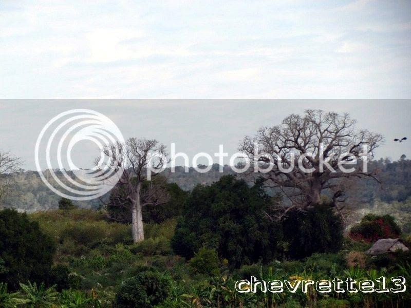 http://i1252.photobucket.com/albums/hh578/chevrette13/Madagascar/IMG_1648Copier_zpsc28de432.jpg