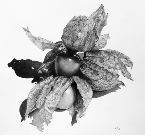 Physalis original charcoal drawing | Charcoal Drawing | North Yorkshire | Drawing In Dark