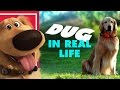 Pixar's Dug the Talking Dog In Real Life -