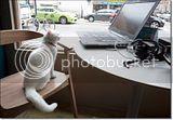 photo Catcafe-6_zpsd371c4e3.jpg