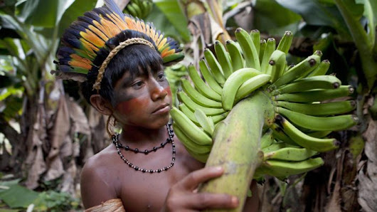 The Amazon is a Man-Made Food Forest, Researchers Discover