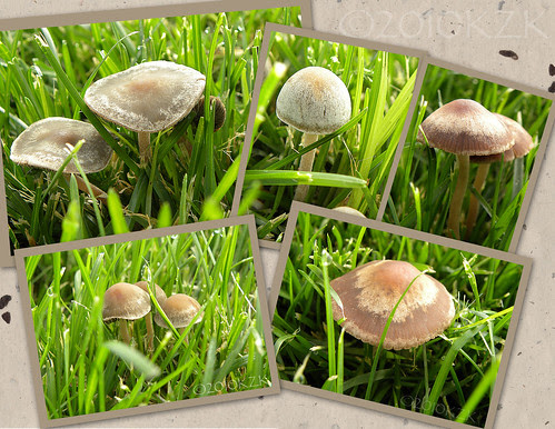 MushroomCollage