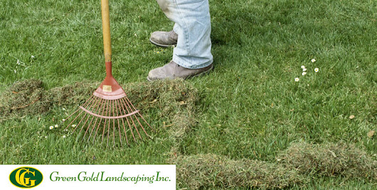 How to Remove Moss from Grass? - Green Gold Landscaping Inc