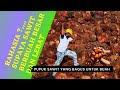 Pupuk Sawit Supaya Berbuah Besar Dan Lebat | Pupuk Yang Bagus Untuk Buah