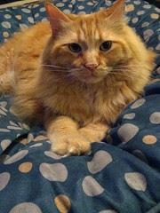 Jasper on the tuffet