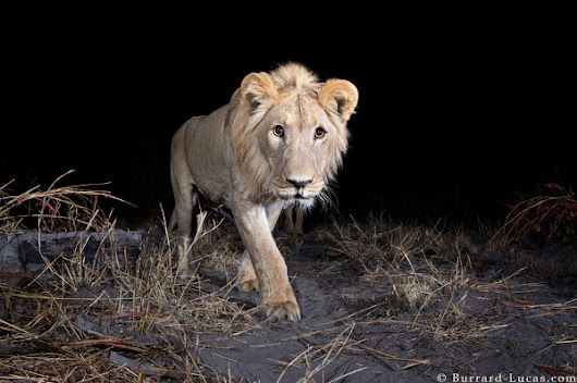 WWF Assignment to Capture Rare Camera Trap Images