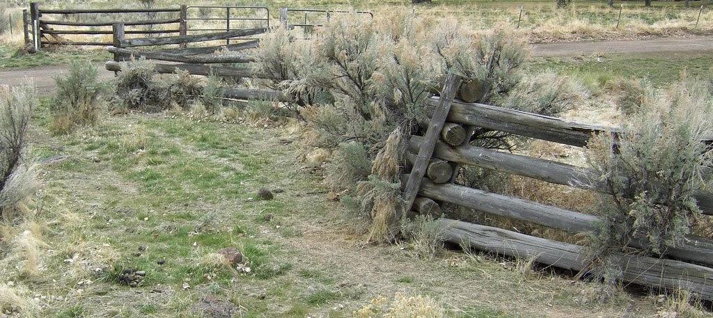 Fence vs Sagebrush