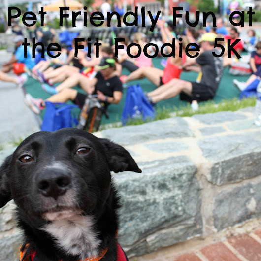 Pet Friendly Fun at the Fit Foodie 5K - Beagles & Bargains