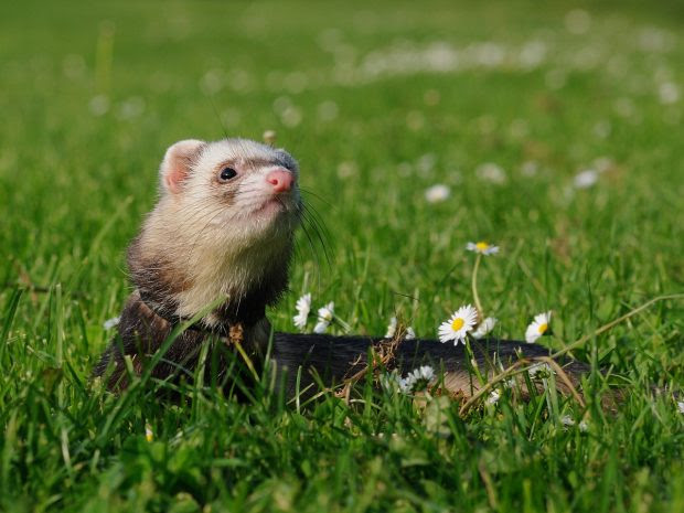 5 Tips to Keeping Skunks Out of Your Yard